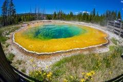 牵牛花池在怀俄明的黄石国家公园 免版税库存照片