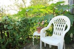 牵牛花藤、桃红色大竺葵和高蓖麻籽植物围拢的平安的门廊设置 图库摄影