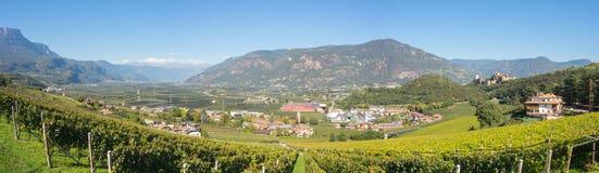特伦托自治省女低音阿迪杰的葡萄园的风景在意大利 酒路线 库存图片