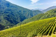 特伦托自治省葡萄园,意大利 库存图片