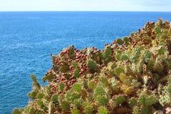 特内里费岛仙人掌仙人掌在一个晴天用红色果子 库存图片
