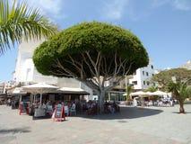 特内里费岛- 1月28 :游人在加那利群岛龙血树龙血树属植物天龙座的树荫下 2018年1月拍的照片28日 免版税图库摄影