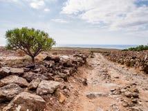 特内里费岛美丽如画的风景  图库摄影