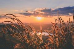 特写镜头与日落的草花 免版税库存照片