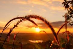 特写镜头与日落的草花 免版税库存图片
