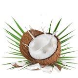 特写镜头与牛奶飞溅的椰子在白色背景 免版税库存照片