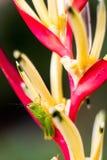 特写镜头五颜六色的天堂鸟花 免版税图库摄影