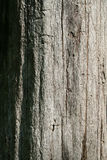 特写镜头停止的结构树 图库摄影