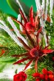 特写镜头冬天在绿色和红颜色的圣诞节花束 免版税库存图片
