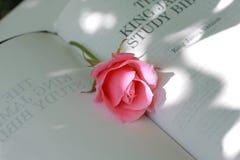 特写镜头可爱的粉红色上升了 库存图片