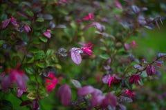 特写镜头园林植物有轻的背景 库存照片