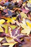 特写镜头在地面上的秋叶 库存图片