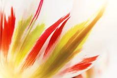 特写镜头宏观美丽的白色红色绿色豪华的充满活力的郁金香peta 免版税库存照片