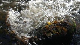 特写镜头射击了在一条山小河的水小河与黄色和棕色秋叶  股票视频