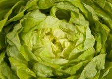 特写镜头新鲜的绿色莴苣沙拉 库存照片
