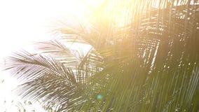 特写镜头明亮的太阳通过棕榈树叶子发出光线光 影视素材
