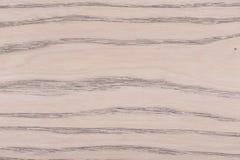 特写镜头明亮的轻的温暖的颜色自然橡木纹理 库存图片