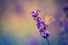 特写镜头春天自然风景 在阳光下的五颜六色的草甸在夏天背景 免版税库存照片