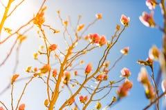 特写镜头春天自然风景 在阳光下的五颜六色的草甸在夏天背景 库存照片