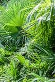 特写镜头棕榈树叶子 免版税库存照片