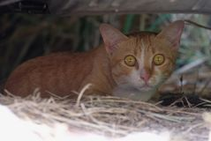 特写镜头棕色猫在庭院坐 免版税库存图片