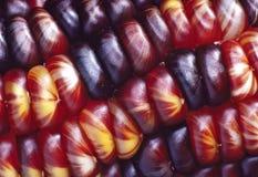 特写镜头玉米印地安人 免版税图库摄影
