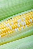 特写镜头玉米 免版税库存照片