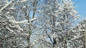 特写镜头用白色雪报道的树上面 影视素材