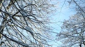 特写镜头用白色雪报道的树上面 股票录像