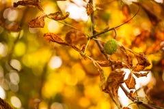 特写镜头秋天自然风景 在阳光下的五颜六色的自然细节在秋天背景 库存图片