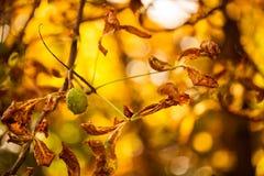 特写镜头秋天自然风景 在阳光下的五颜六色的自然细节在秋天背景 免版税库存图片