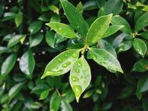 特写镜头绿色叶子和水下落 免版税库存图片