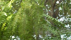 特写镜头绿色叶子背景 影视素材