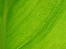 特写镜头绿色叶子自然视图在庭院里在夏天 库存图片