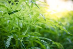 特写镜头绿色叶子自然视图在被弄脏的绿叶的 免版税库存照片