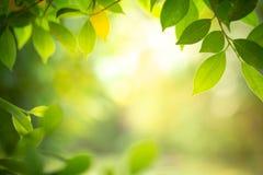 特写镜头绿色叶子自然视图在被弄脏的背景的 免版税库存照片