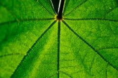 特写镜头绿色叶子 免版税图库摄影