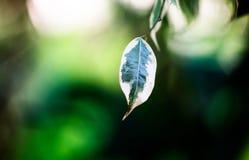 特写镜头绿色背景的叶子自然 创造性做了绿色树叶子 库存照片