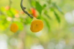 特写镜头罕见的树在泰国 免版税图库摄影