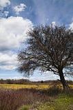 特写镜头老结构树 免版税库存照片