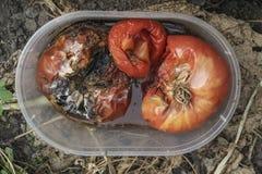 特写镜头腐烂的蕃茄 库存图片