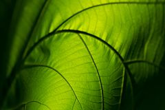 特写镜头自然绿色叶子卷起抽象背景的纹理 库存照片