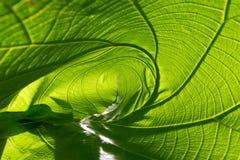 特写镜头自然绿色叶子卷起抽象背景的纹理 免版税图库摄影