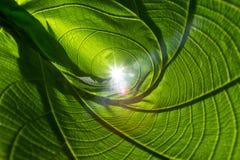 特写镜头自然绿色叶子卷起抽象背景的纹理 库存图片