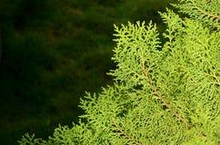 特写镜头自然视图和绿色叶子抽象Bokeh在被弄脏的绿色背景的与文本的拷贝空间 库存图片