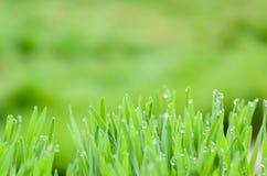特写镜头自然视图和绿色叶子抽象Bokeh在被弄脏的绿色背景的 库存照片