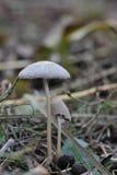 特写镜头蘑菇 图库摄影