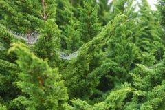 特写镜头被射击在蜘蛛网的露滴 免版税库存照片