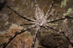 特写镜头被射击树干蜘蛛 免版税库存照片