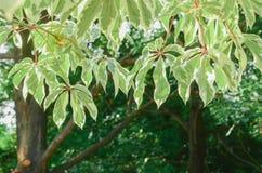 特写镜头被弄脏的绿色叶子背景 免版税库存图片